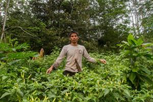 vegetable agroforestry