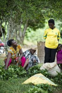 Gnetum market in Cameroon. Photo: Ollivier Girard/CIFOR