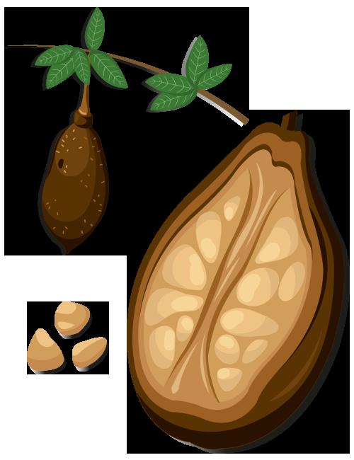 https://www.foreststreesagroforestry.org/wp-content/uploads/2021/04/Baobab-Fruit.png